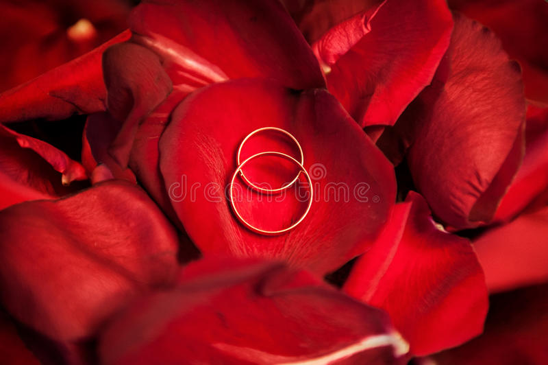 Ślubni złociści pierścionki na czerwieni róży płatkach zdjęcia stock