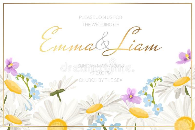 Ślubny małżeństwa wydarzenia zaproszenia karty szablon Stokrotki chamomile kwiatów granicy niezapominajkowa dzika śródpolna łąkow royalty ilustracja