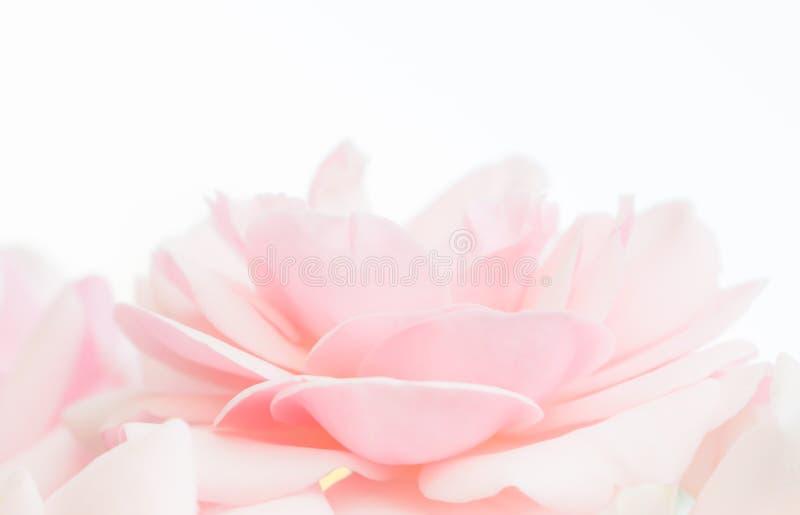 Ślubny tło z delikatną kwiatu i światła szpilką zdjęcie royalty free