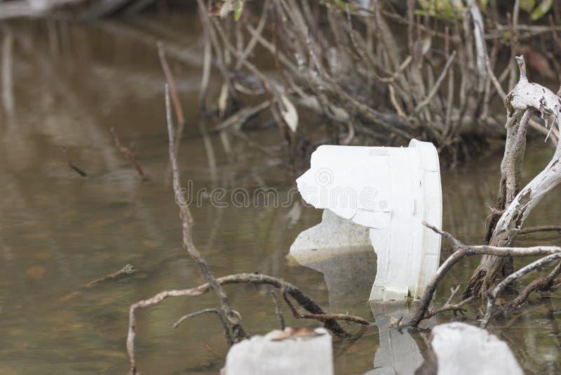 Śmiecący mangrowe Key West Floryda - Żadny Wymienia klucz - obrazy stock