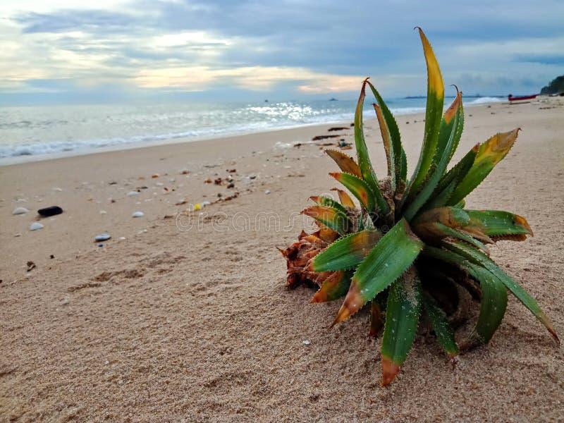 Śmieci na plaży zdjęcie royalty free