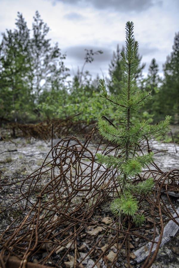 Śmieci w lesie obrazy stock