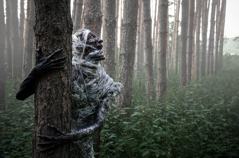 Śmierć w lesie obraz royalty free
