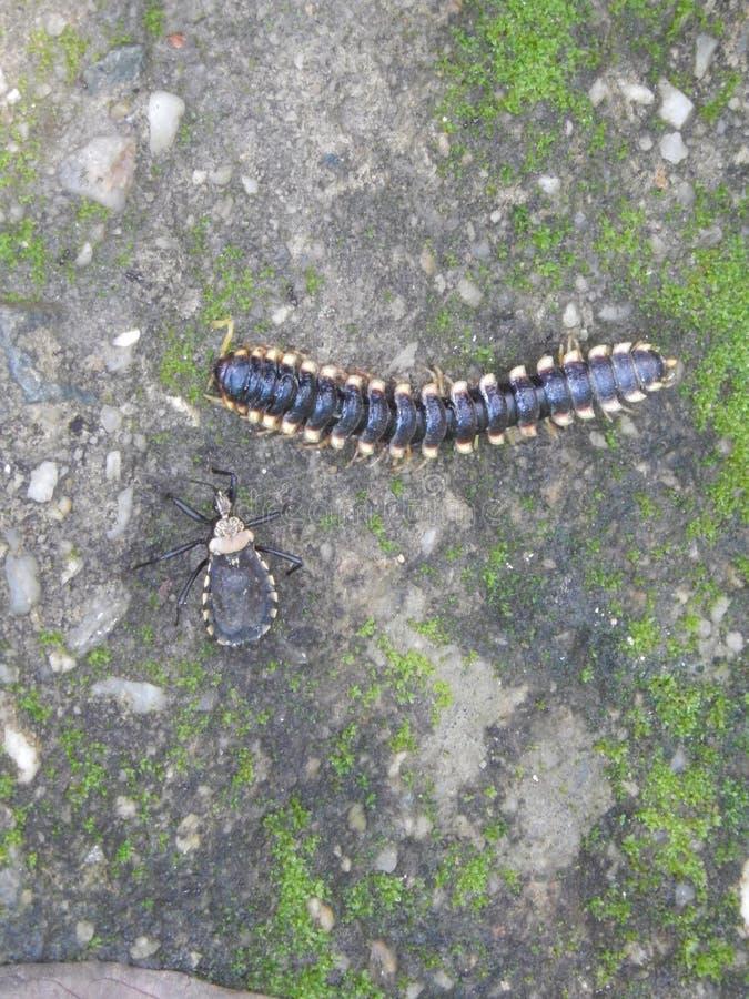 Śmiertelni insekty zdjęcia royalty free