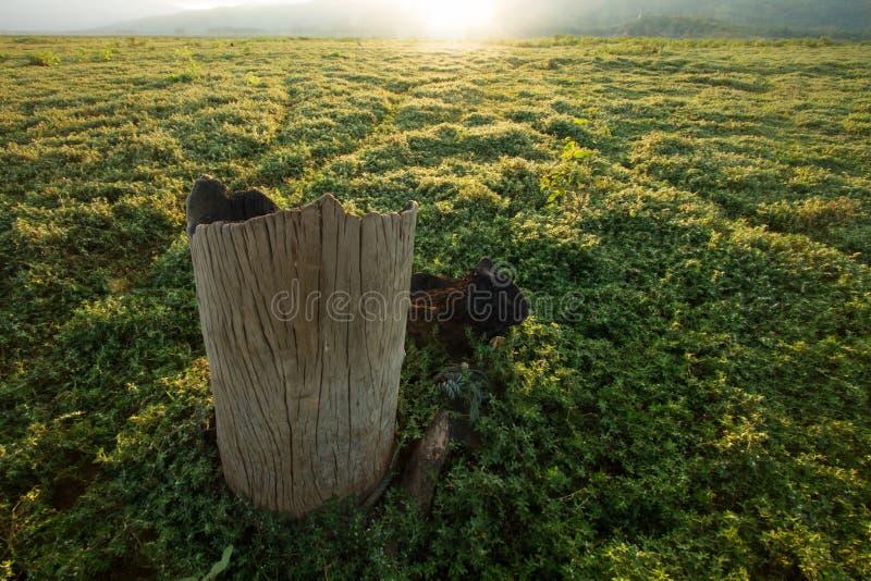 Śmiertelny drzewo w łąkach obrazy royalty free