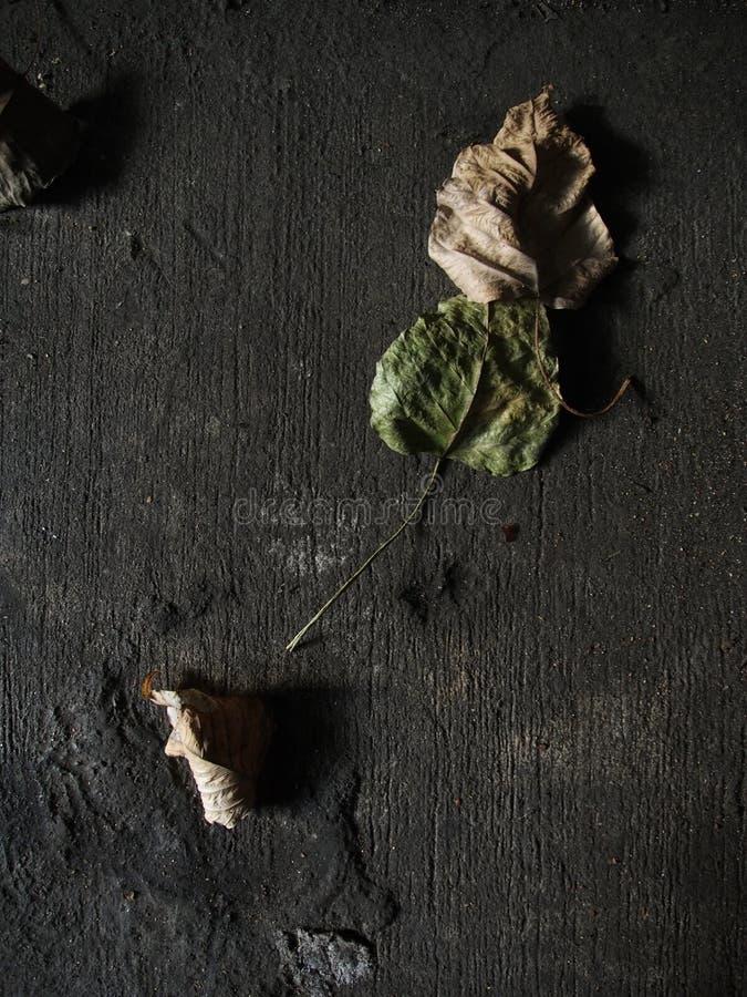 Śmiertelny liść na wazeliniarskiej drodze obraz royalty free