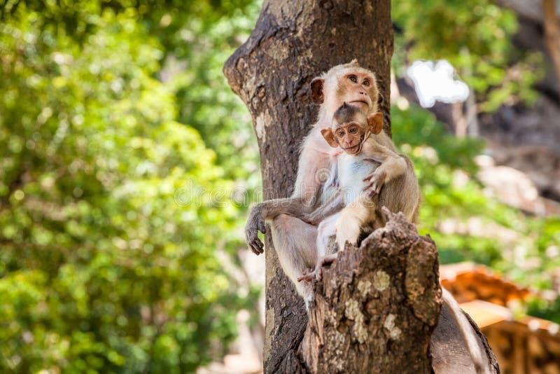 śmieszna dziecko małpa zdjęcia stock