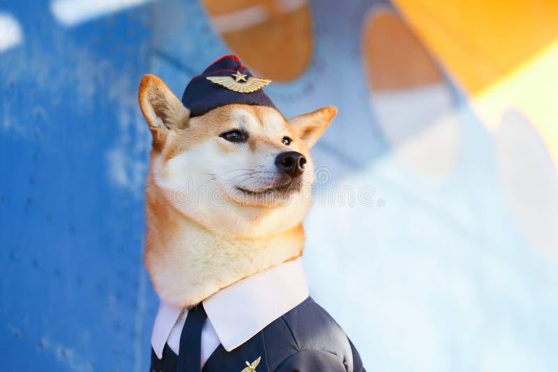 Śmieszna fotografia Shiba inu pies zdjęcia royalty free