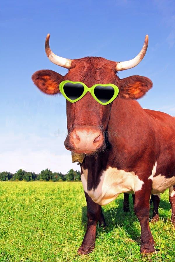 Śmieszna krowa z zielonymi widowiskami zdjęcie royalty free