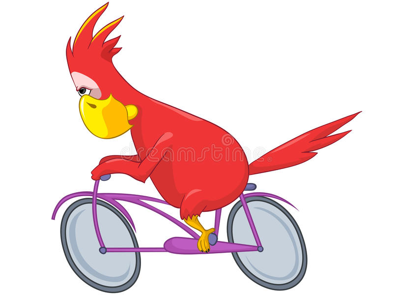 śmieszna rowerzysta papuga ilustracji