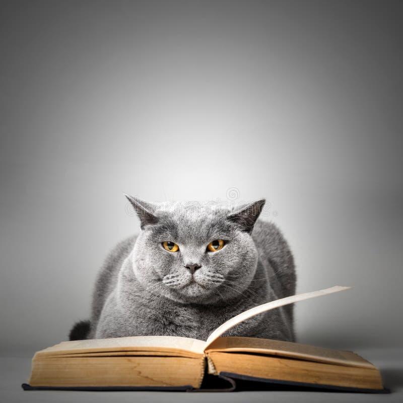 Śmiesznego ślicznego kota czytelnicza książka zdjęcie royalty free