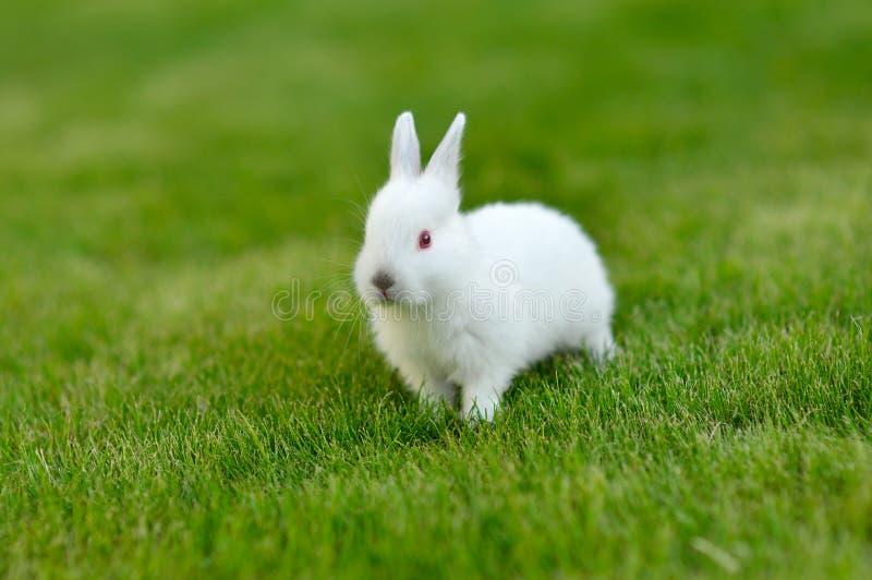 Śmiesznego dziecka biały królik w trawie obrazy stock