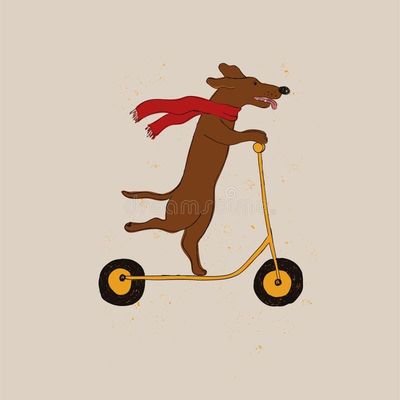 Śmiesznego jamnika psa Jeździecka hulajnoga royalty ilustracja