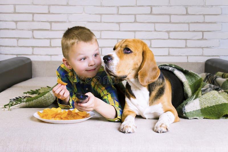 Śmieszni chłopiec i psa Beagle łasowania układy scaleni fotografia royalty free