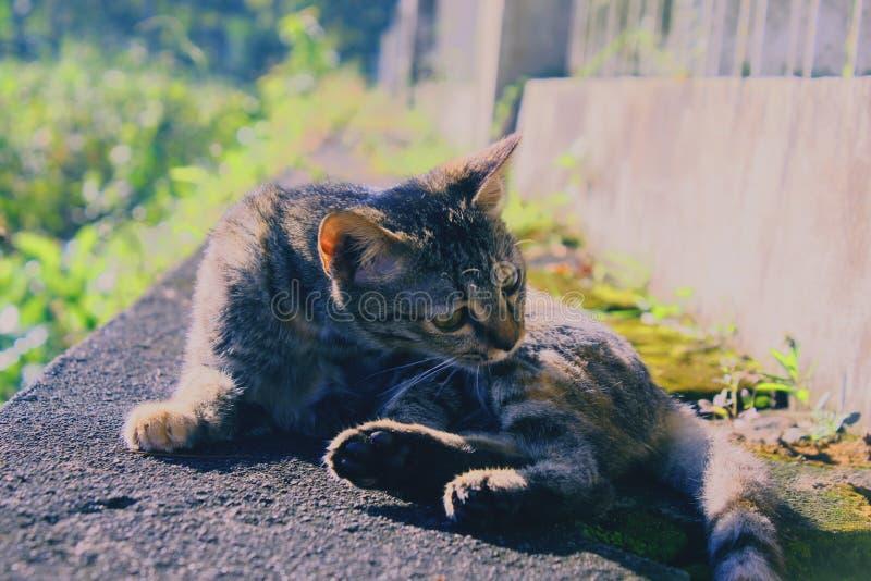 Śmieszni koty czasem są także uroczy ich zachowanie zdjęcia royalty free