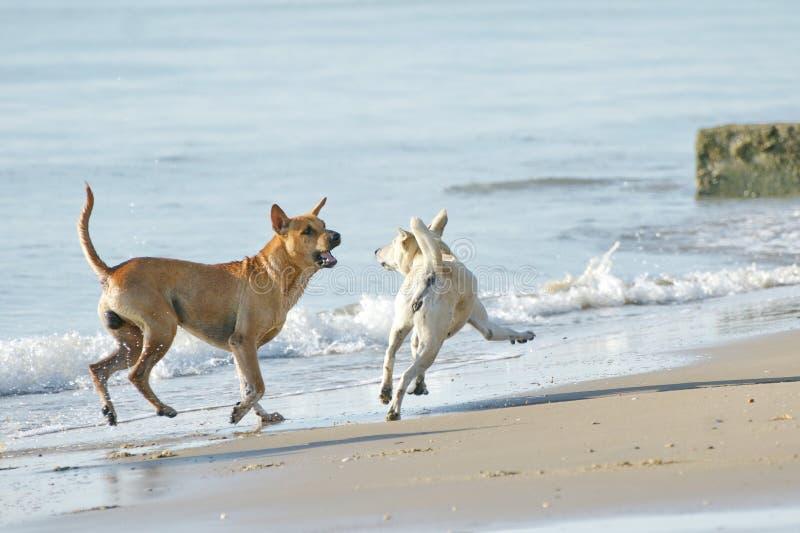 Śmieszni psy na plaży obraz stock