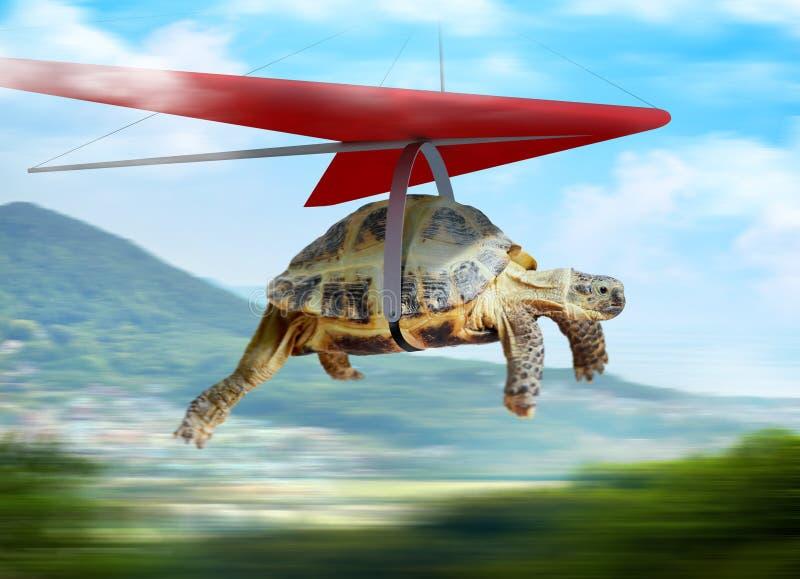 Śmieszny żółwia latanie na szybowu obrazy royalty free
