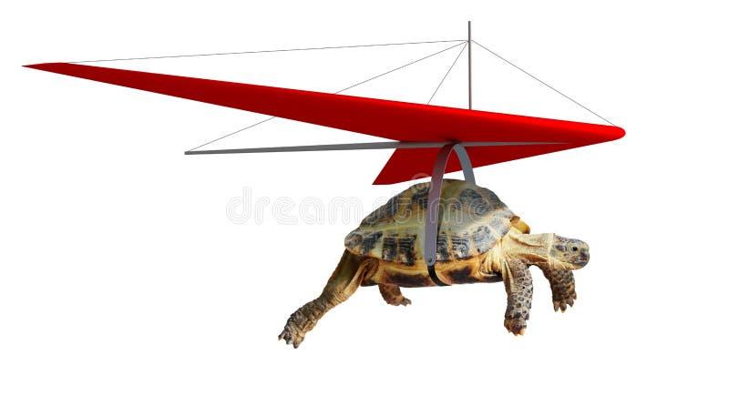 Śmieszny żółwia latanie na szybowu fotografia royalty free