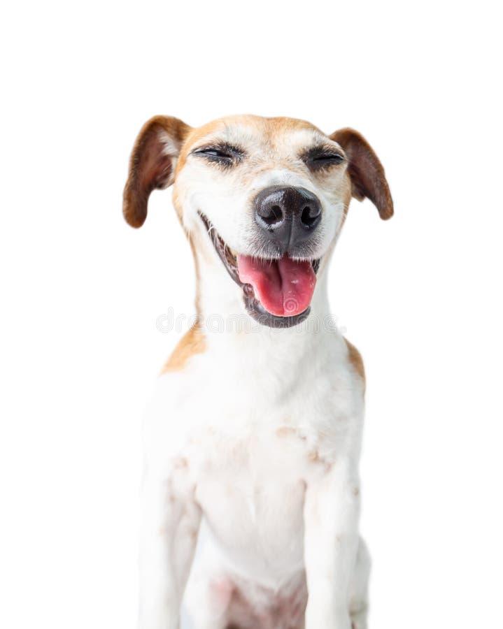 Śmieszny żartuje pies obraz royalty free