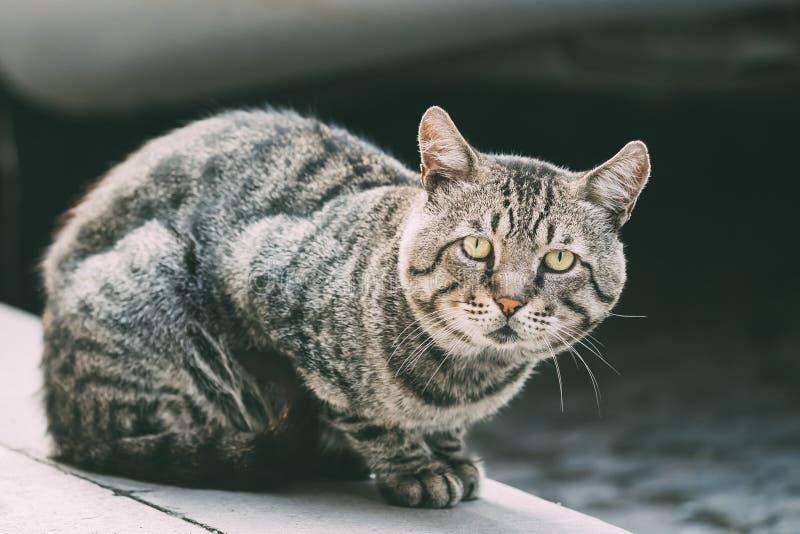 Śmieszny Ciekawy Śliczny Bezdomny Szary kota Siedzieć Plenerowy W ulicie zdjęcie royalty free