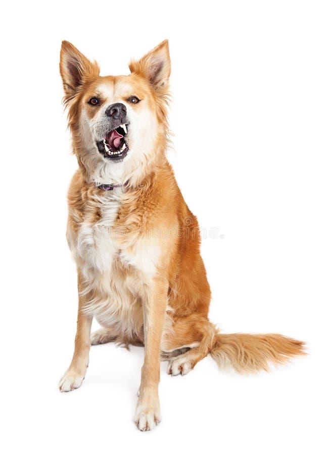 Śmieszny Głodny Żółty pies zdjęcie royalty free