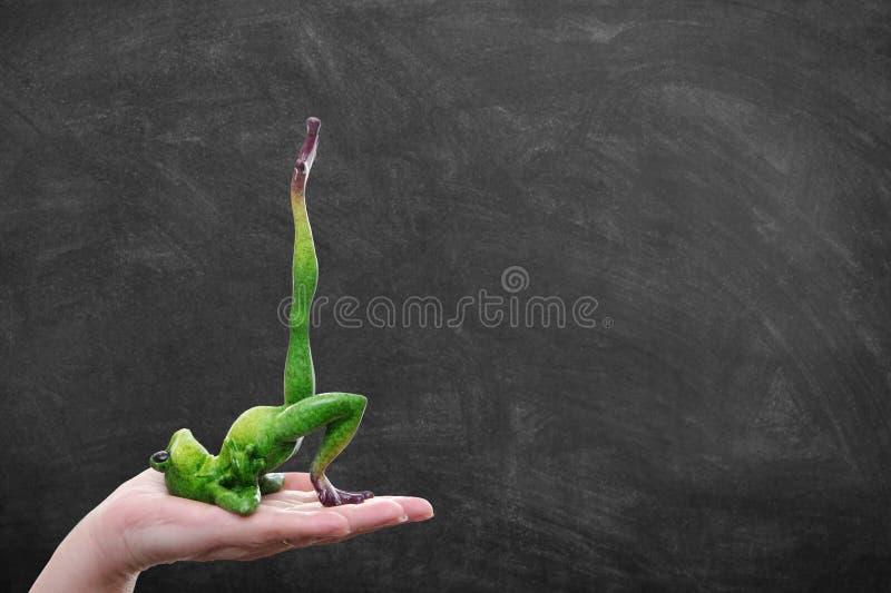 Śmieszny gruby żaby sprawności fizycznej, równowagi i treningu pojęcie na kobiecie, zdjęcie royalty free
