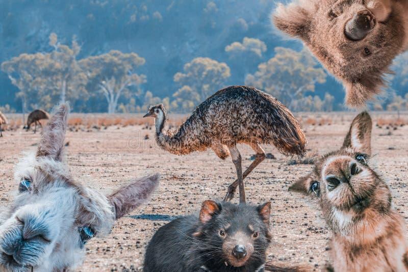 Śmieszny kolaż zwierzęta żyje w Australia fotografia royalty free