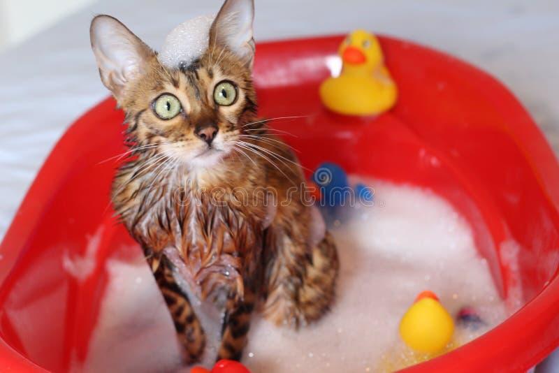 Śmieszny kot bierze skąpanie fotografia royalty free