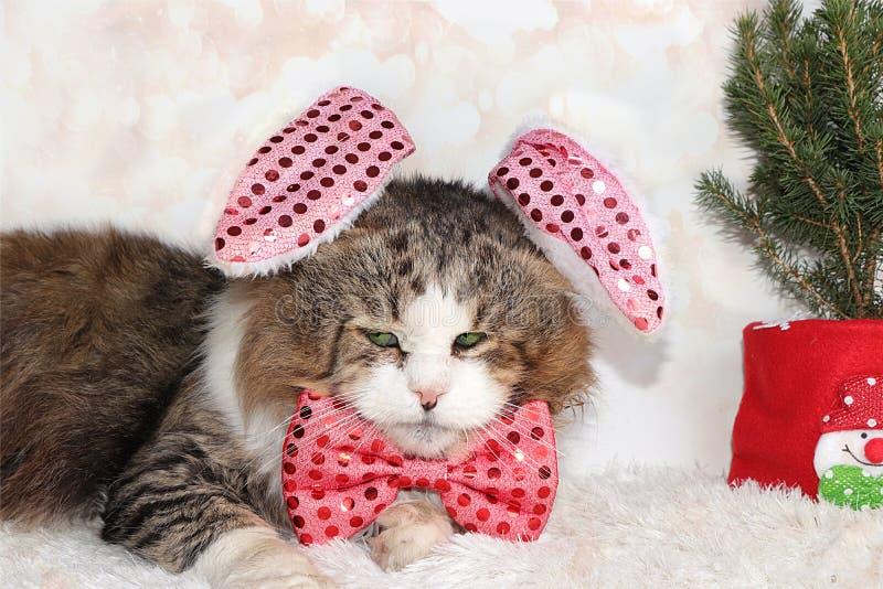 Śmieszny kot noworoczny w świątecznym ukłon i uszy na tle buka i żywego choinki w garnku, koncepcja lasu zdjęcie stock