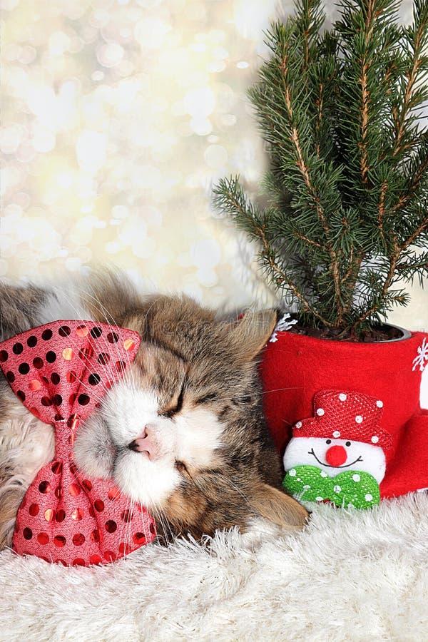 Śmieszny kot noworoczny w świątecznym ukłon i uszy na tle buka i żywego choinki w garnku, koncepcja lasu obraz royalty free
