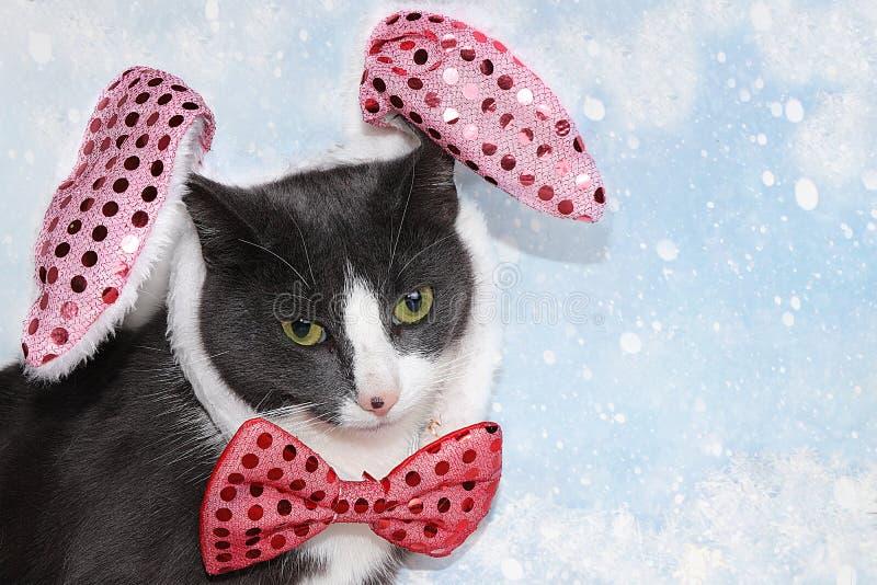 Śmieszny kot noworoczny w świątecznym ukłon i uszy na tle niebieskiego śniegu, karta świąteczna, wygaszacz ekranu do wyświetlania zdjęcie stock