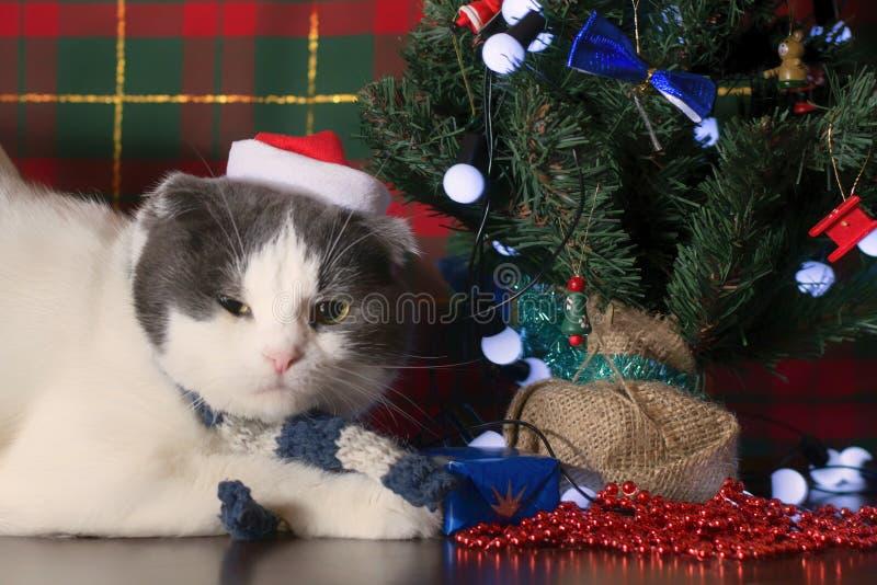 Śmieszny kot w Święty Mikołaj nakrętki lying on the beach pod nowego roku drzewem zdjęcie stock