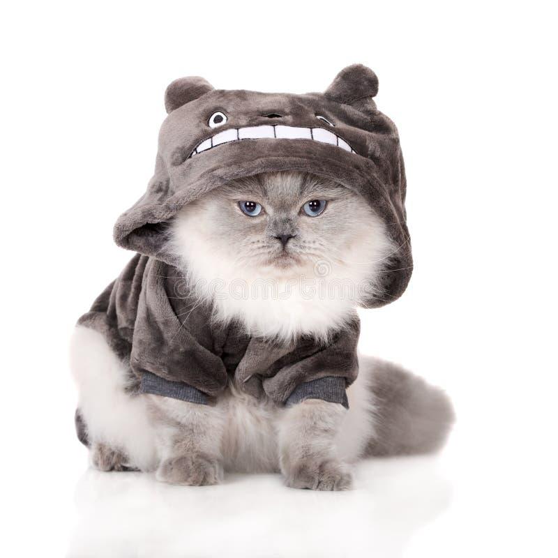 Śmieszny kot w odziewa fotografia stock