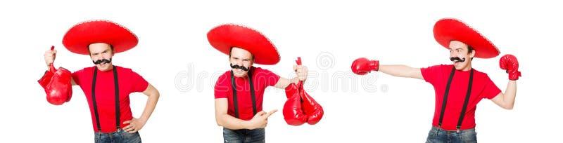 Śmieszny meksykanin z bokser rękawiczkami odizolowywać na bielu obrazy stock