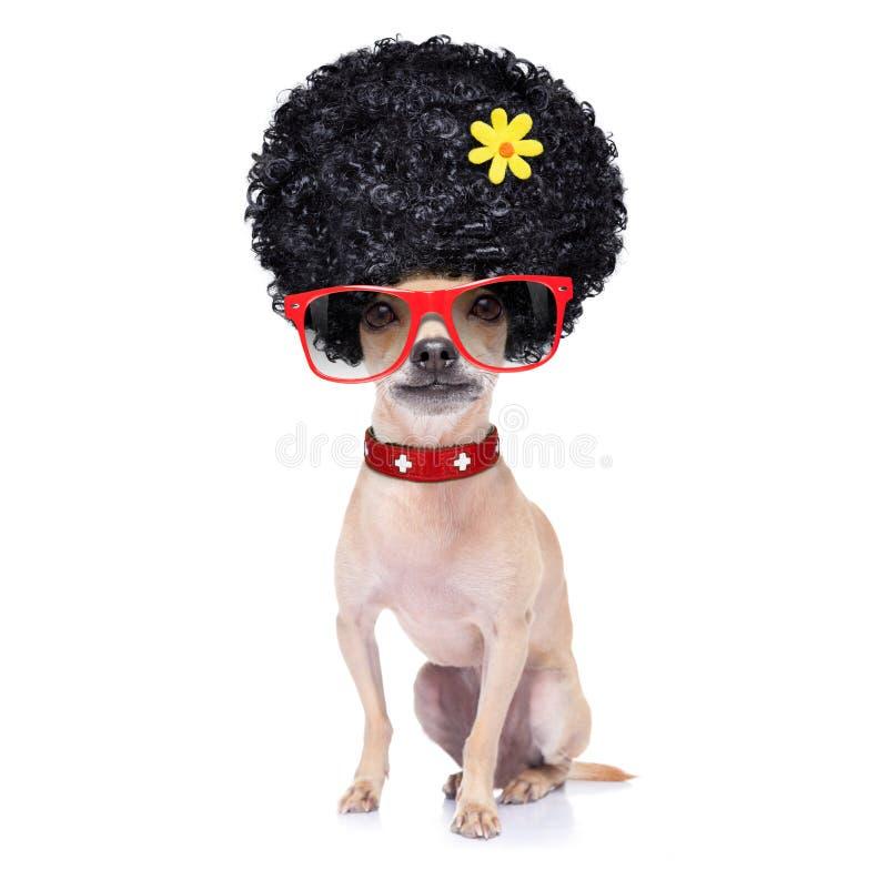 Śmieszny niemy pies obrazy royalty free