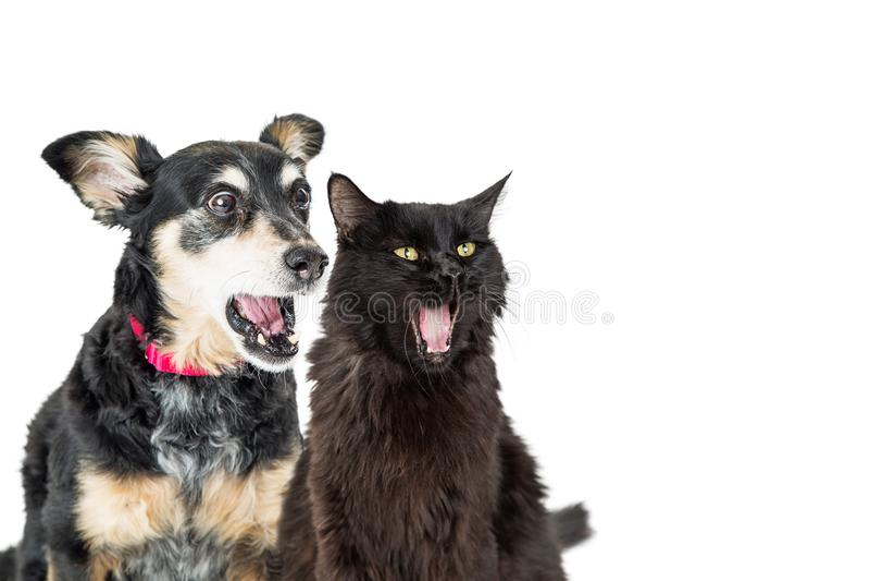 Śmieszny pies i kot Z Szokującymi wyrażeniami zdjęcia stock