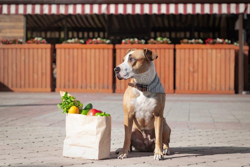 Śmieszny pies i torba sklepy spożywczy przed rynkiem lub lokalnym sklepem fotografia stock