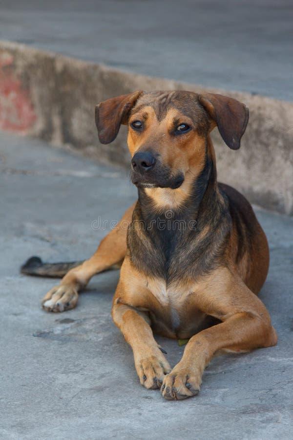 Śmieszny pies na ulicie Granada zdjęcia royalty free