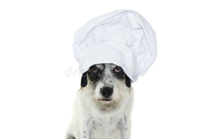 ŚMIESZNY pies ROBI twarzy Z szefa kuchni KAPELUSZOWYM KULINARNYM jedzeniem Odizolowywający dalej fotografia stock