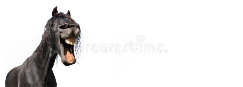 Śmieszny portret czarny koń odizolowywający fotografia stock