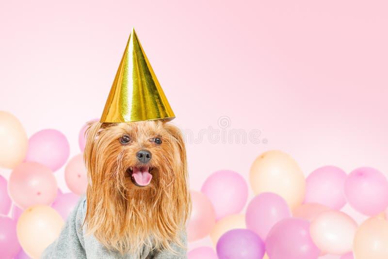 Śmieszny przyjęcie pies z baloons zdjęcie royalty free