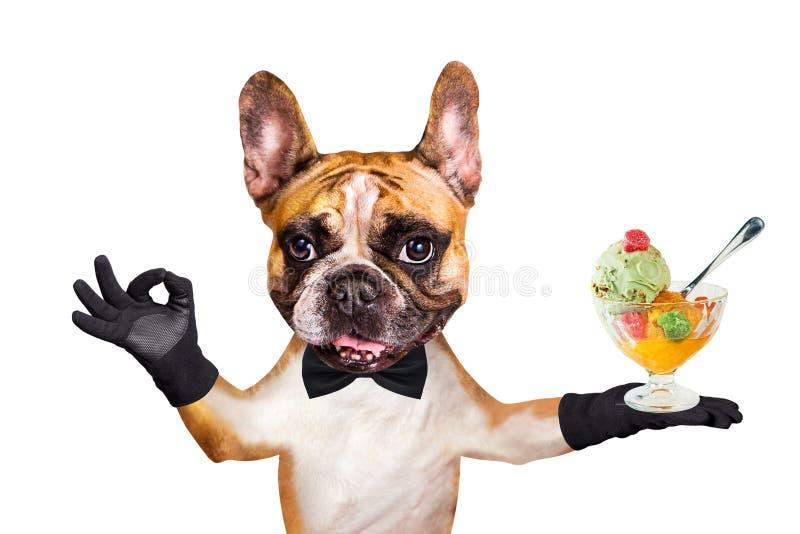 Śmieszny psi imbirowy francuskiego buldoga kelner w czarnym łęku krawata chwycie lody piłki i pokazuje znaka approx Zwierz? odizo obrazy royalty free