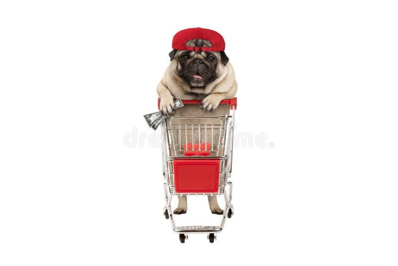 Śmieszny szczęśliwy mopsa szczeniaka pies z pieniądze wewnątrz jest ręką, opiera na wózek na zakupy zdjęcie stock