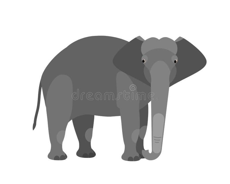 Śmieszny uroczy śliczny słoń odizolowywający na białym tle Wielki dziki mądrze afrykanin i Azjatycki trawożerny ssaka zwierzę royalty ilustracja