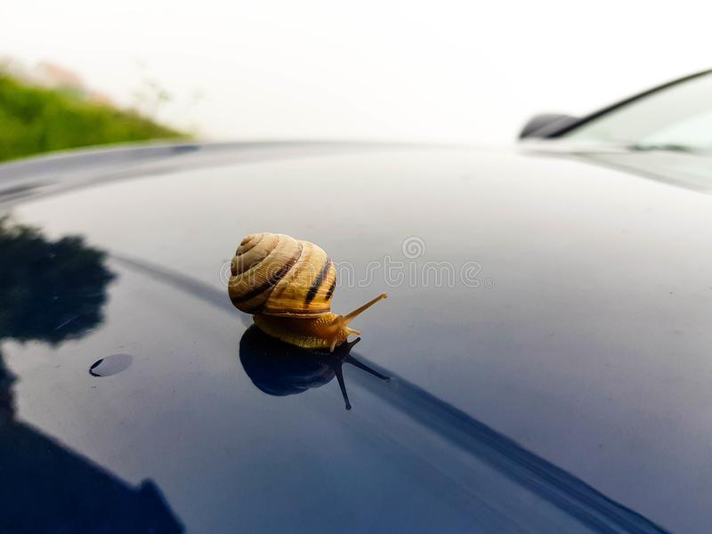Śmieszny wizerunek mały ogrodowy ślimaczek na nowożytnym samochodzie zdjęcie stock