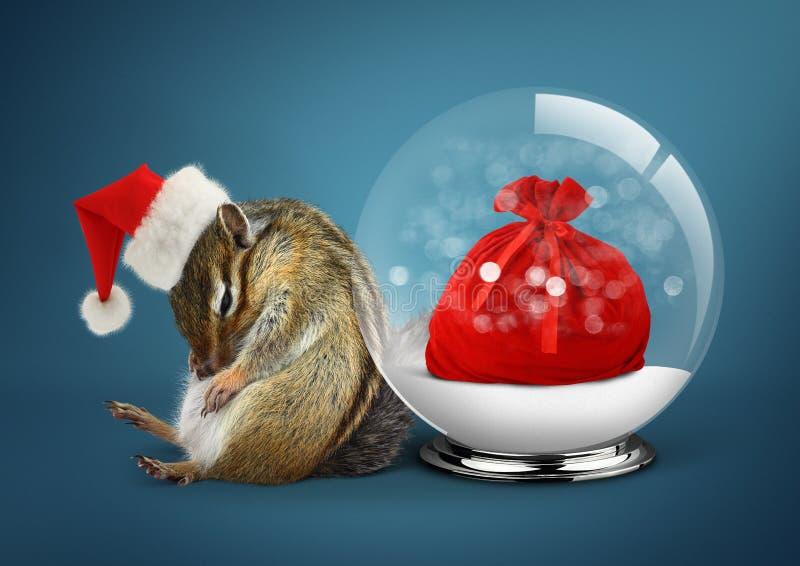 Śmieszny zwierzęcy chipmunk ubierający jako Santa z śnieżną piłką i workiem, obraz stock