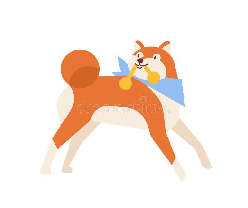 Śmieszyć Akita Inu przewożenia zabawkę lub bawić się z nim Figlarnie purebred szyi psi jest ubranym szalik odizolowywający na bia royalty ilustracja