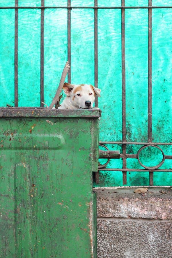 Śmietnika pies obrazy stock