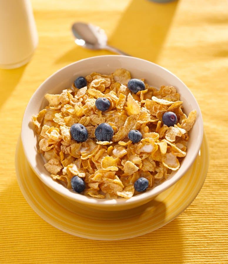 Śniadanie: kukurydzani płatki z czarnymi jagodami w mo fotografia royalty free