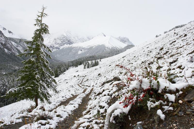 Śnieżki drogowy drewna zdjęcia royalty free